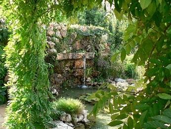 Acu ticos lotus mallorca s l for Jardines acuaticos