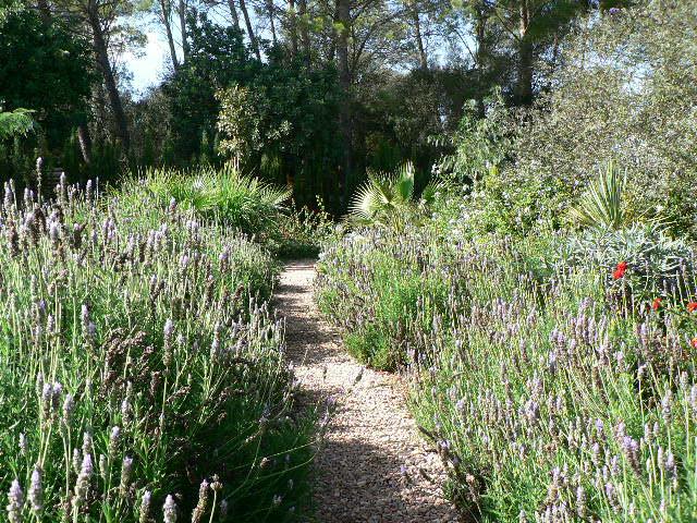 Jardines lotus mallorca s l Plantas jardin mediterraneo